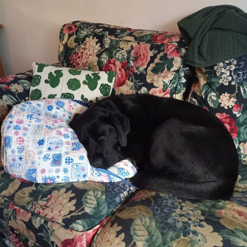 Onze hond vindt de pannenstoof ook mooi